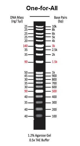 All-for-One DNA Marker (0.5ml)
