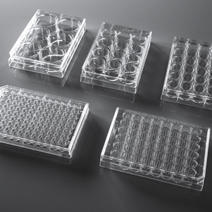 12-well Cell Culture Plate (Sterile, Flat, TC, 1/pk, 50/cs)