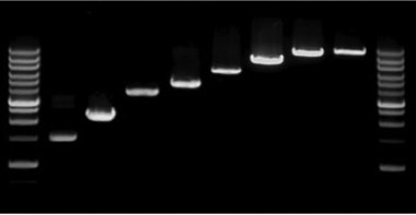 PowerScript Plus 1st Strand cDNA Synthesis Mastermix (100 RXN)