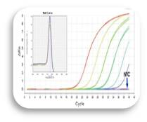 2xqPCR Master Mix (High ROX, 1ml)