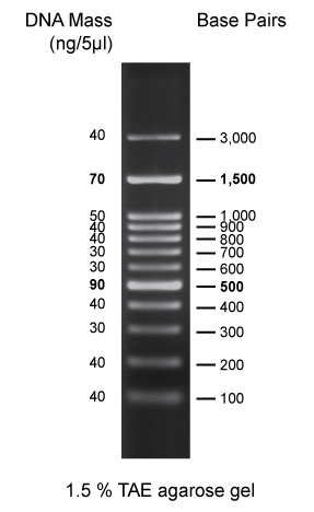 100 bp DNA markers (0.5 ml, 100 loadings)