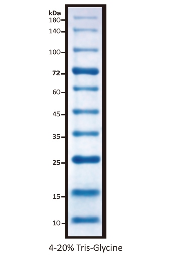 All Blue Prestained Protein Marker I (10-180kD), 0.5 ml