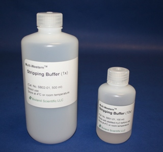 Multi-Western Stripping Buffer (1x, 500 ml)